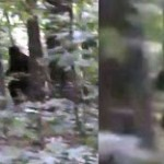 Incredibile Bigfoot Footage (2013)